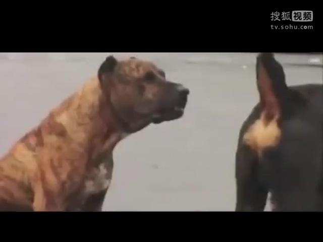 动物的性行为_视频在线观看-爱奇艺搜索
