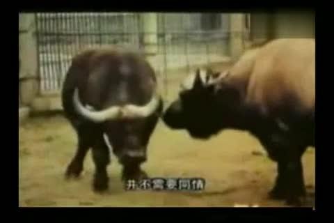 动物世界之性行为_视频在线观看-爱奇艺搜索