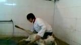 美女骑虐羊视频的专题