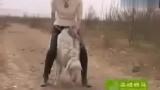 关于美女骑羊视频的专题
