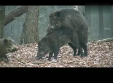 动物世界大全性_视频在线观看-爱奇艺搜索