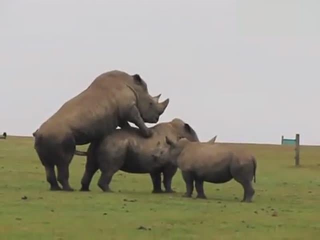 动物世界犀牛_视频在线观看-爱奇艺搜索