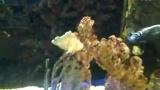 狗頭魚蒙面神仙魚蝶魚海水缸